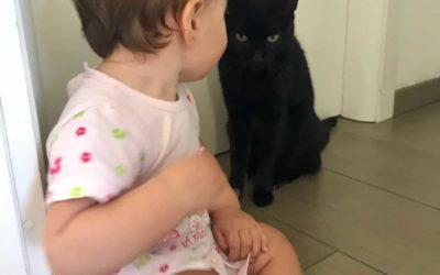 Come far convivere gatti e bambini e le cose da non dire a chi ha un figlio e un micio