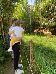 parco natura viva Bussolengo Verona giornata con un bambino